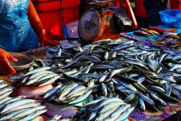 Sabah Borneo 09